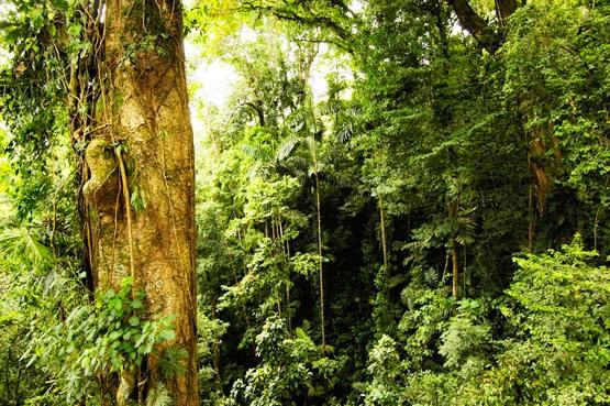 Veragua Rainforest in Costa Rica Caribbean