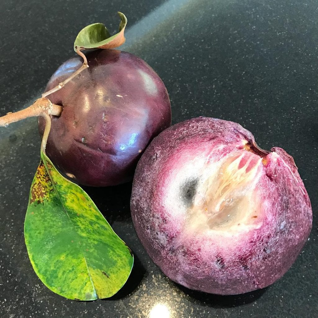 Caimito or Star Apple, tropical fruit found in Costa Rica. Photo credit @denisselashley