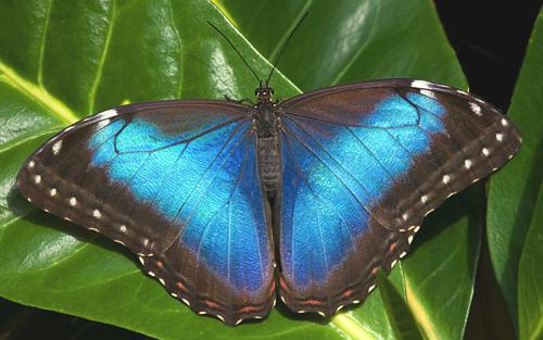 See amazing butterfly species in Costa Rica at Veragua Rainforest