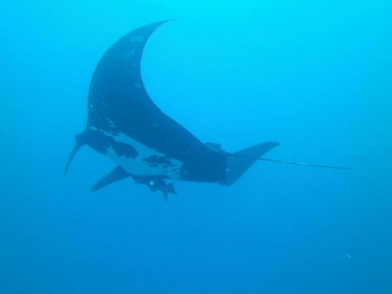 Snorkeling tour in Guanacaste