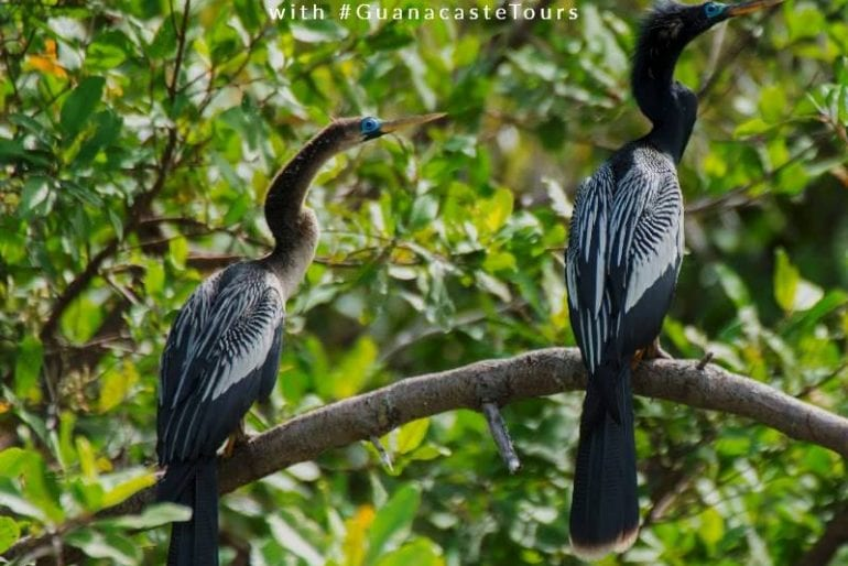 Birdwatching in Guanacaste, Costa Rica