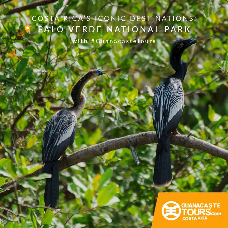 iconic places in costa rica palo verde national park