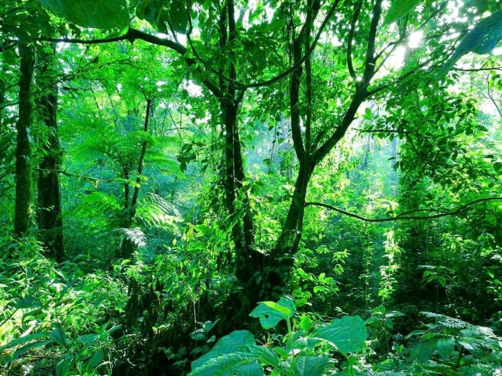Bluish Green Rainforest at Sensoria. Photo credit Sensoria.