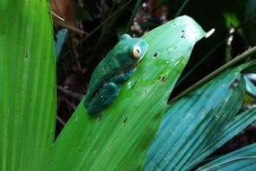 Veragua Rainforest in Costa Rica inspires cutting-edge biomimicry product design