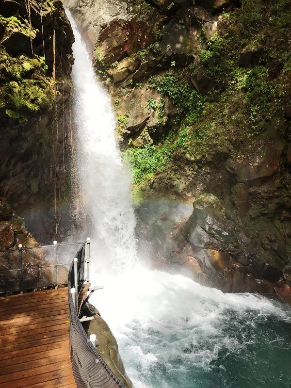 Waterfall Oropendula at Rincon de la Vieja