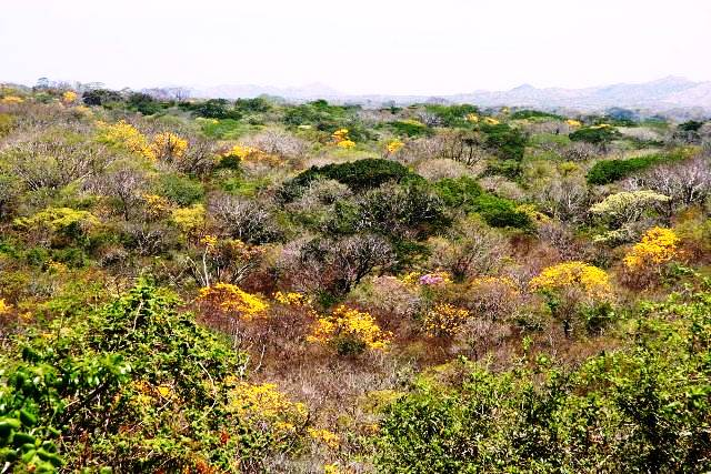 Guanacaste tropical dry forest, image by GDFCF