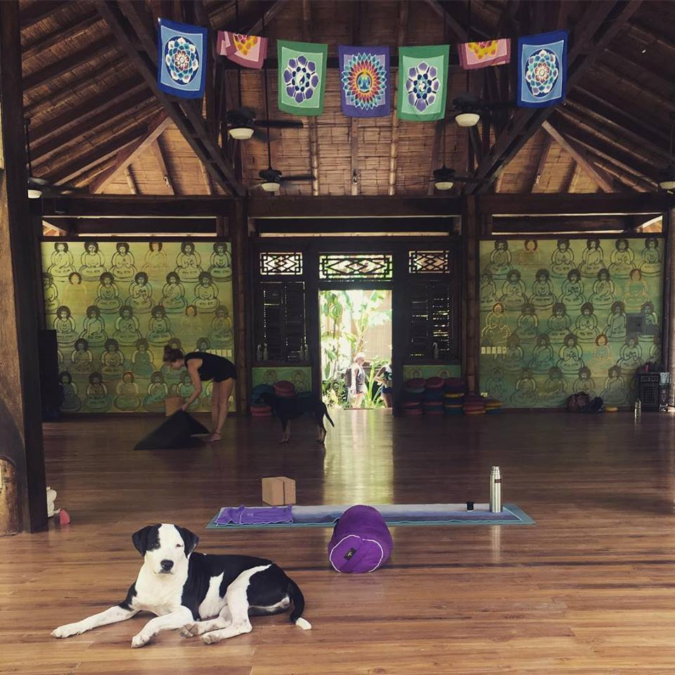 Yoga at Pranamar Villas