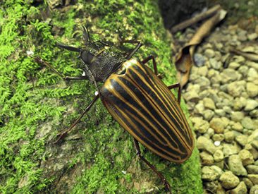 Discover Dazzling Costa Rica Insects at Nicuesa Lodge