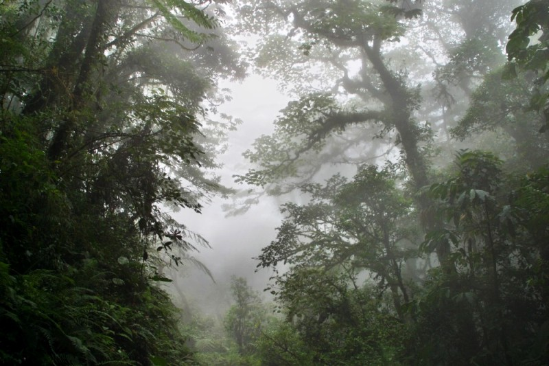 Monteverde cloud forest in Costa Rica, image from Tropical Science Center