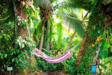 It's Time to Log Off on a Digital Detox Vacation in Costa Rica