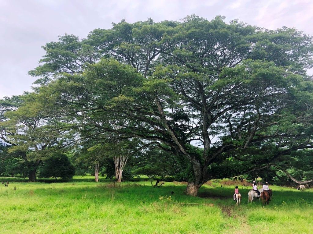 Hacienda Ario Tours