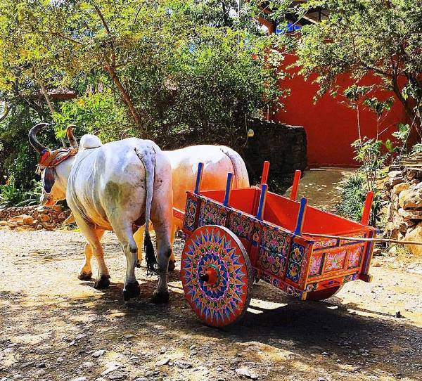 Oxcart at Hacienda Guachipelin