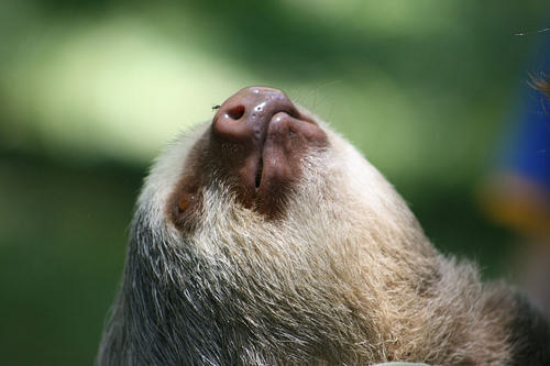 15 Fun Facts about Sloths in the Rainforest