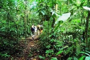 Hiking at Playa Nicuesa Rainforest Lodge in Costa Rica