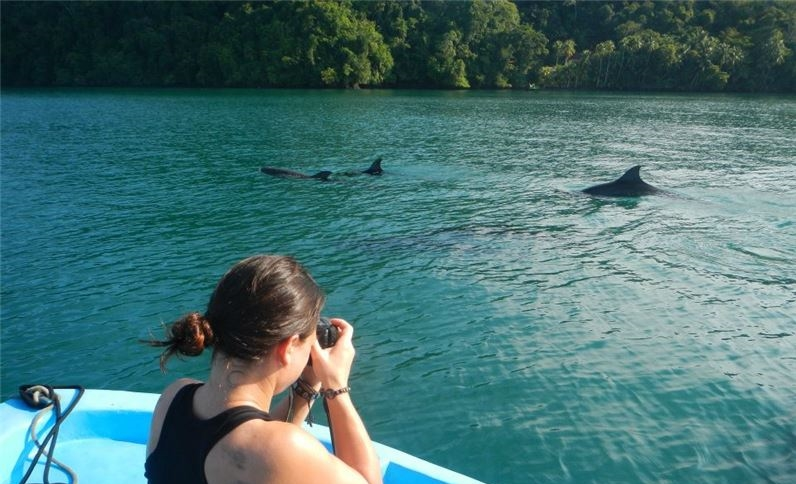 Dolphin tour at Nicuesa Lodge