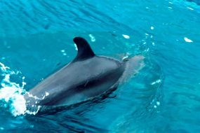 See wild dolphins and whales on a Golfo Dulce Dolphin Tour