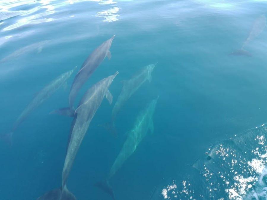 Golfo Dulce Dolphin Tour